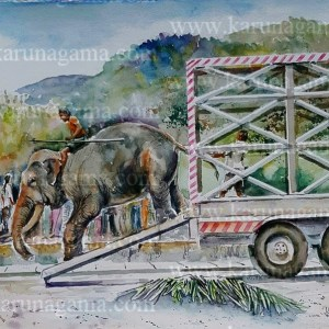 Online, Art, Art Gallery, Online Art Galley, Sri Lanka, Karunagama, Watercolor, Water Colour, Sri lanka tuskers, Sri lanka elephants, Elephants, Tuskers, Landscapes, Kandy, Kandy perahara, Transportation.
