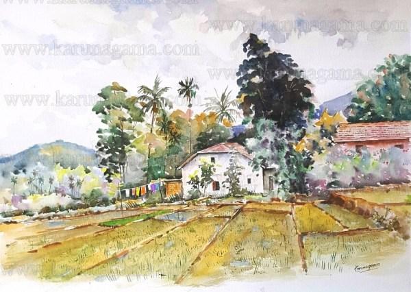 Art, Art Gallery, Karunagama, Online, Online Art Galley, Paddy field, Sri Lanka, Sri lanka Landscape, Sri lanka paddy field, Water Colour, Watercolor