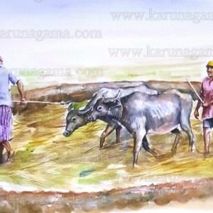Art, Art Gallery, Kamatha, Karunagama, Online, Online Art Galley, Paddy cultivation., Paddy field, Sri Lanka, Sri lanka paddy, Water Colour, Watercolor