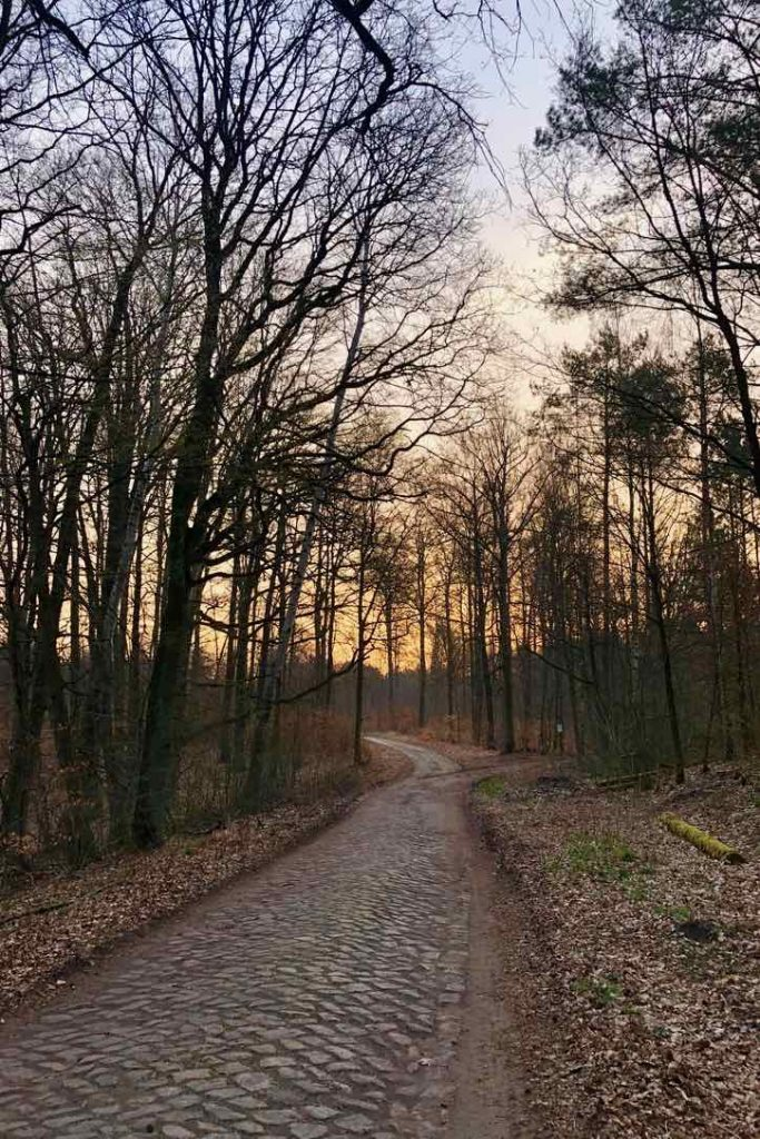 Ein Weg im Wald aus Kopfsteinpflaster führt in die Ferne, Morgenröte am Horizont scheint durch die kahlen Bäume.