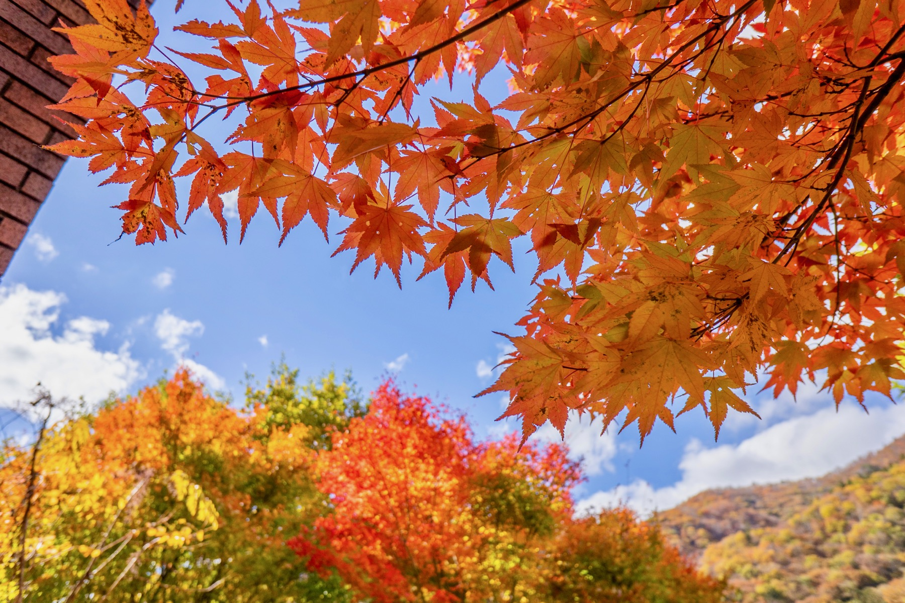 10 Best Places For Autumn Leaves In Kanto