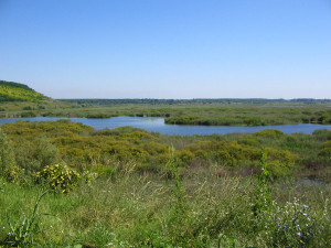 The green wetlands of Srebarna are one of Europe's most vital bird areas