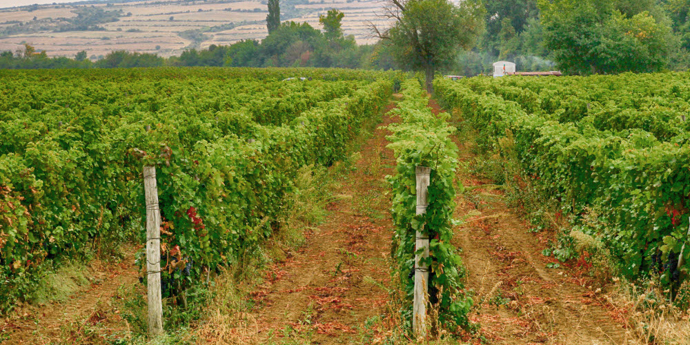 7 unique Bulgarian wine varieties you must taste