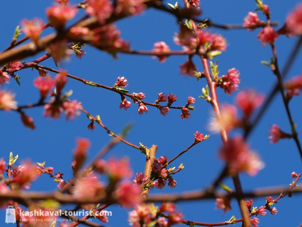 After the harshness of winter, the blossom of trees signals the beginning of Bulgarian spring
