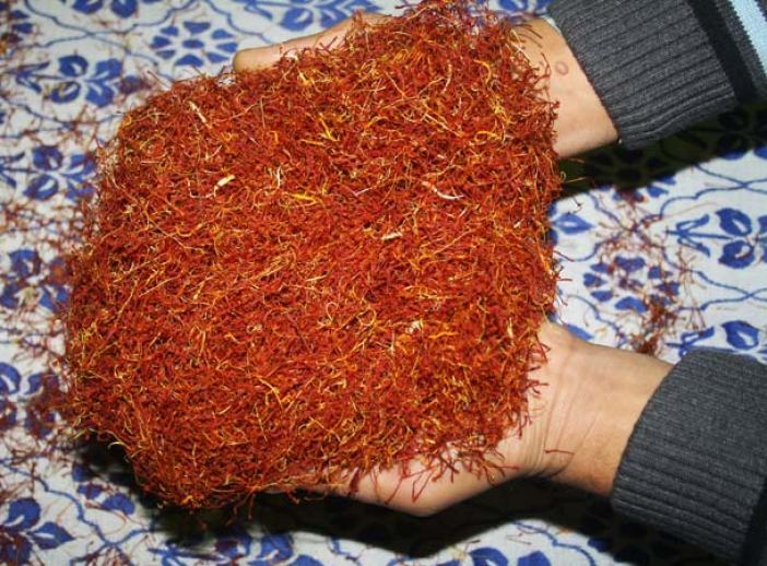 End Product: The stigmas of saffron cultivated in Kashmir are extremely long and with a thicker head. They are also of a deep red color. The size of the stigmas indicates the inherent suitability of the soil and climate for this product.