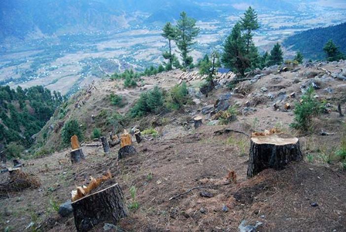 Deforestation-in-Kashmir