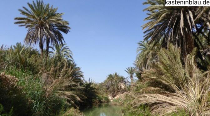 Oase Tighmert bei Guelmim (Nordsahara)