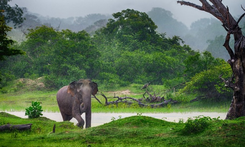 9 Of The Best Things To Do In Sri Lanka