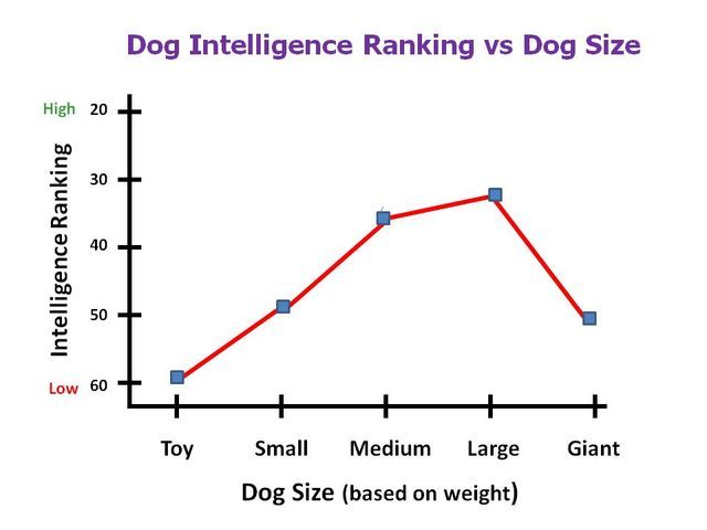 Are Big Dogs Smarter Than Small Dogs?