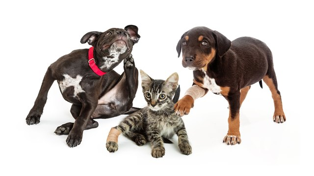 How to Kill Fleas on Your Cat or Dog, Once and For All