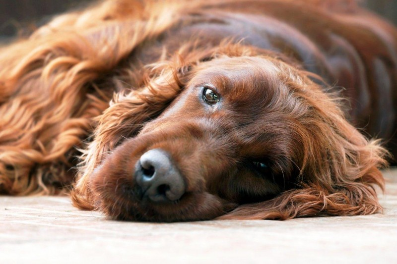 The Best Temperament Dog Breeds