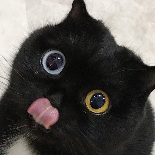 Natuurlijk kattenvoer, is het goed voor je kat?