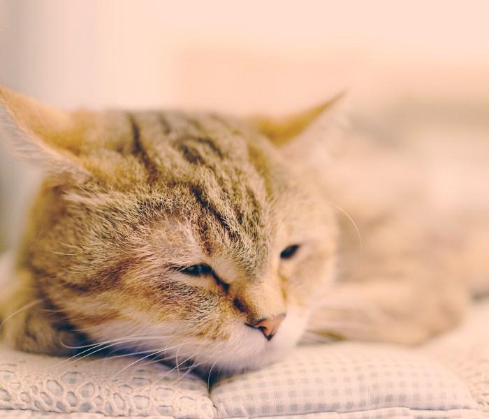 Katten bij warm weer; een aantal praktische tips