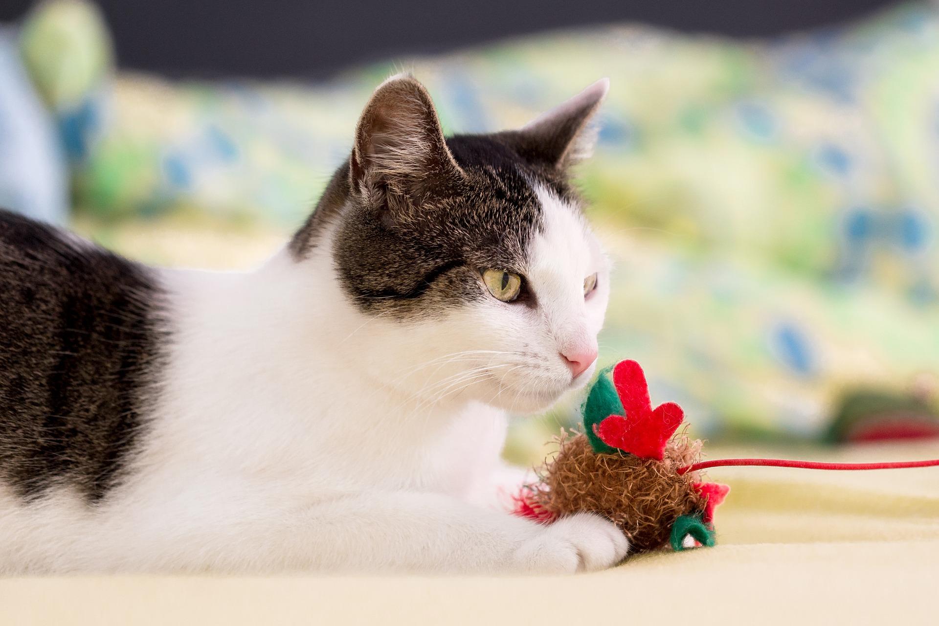 De leukste en goedkoopste kattenspeeltjes