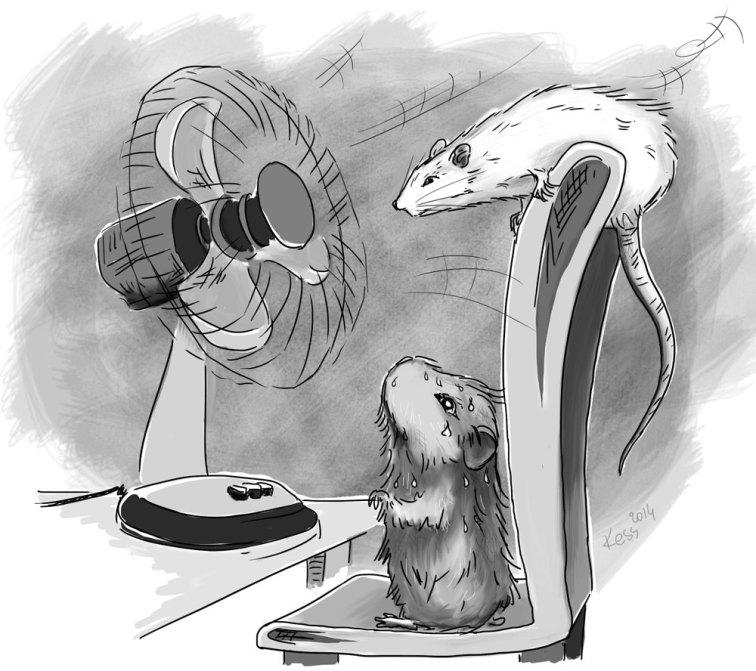 Upał - szczury z wentylatorem