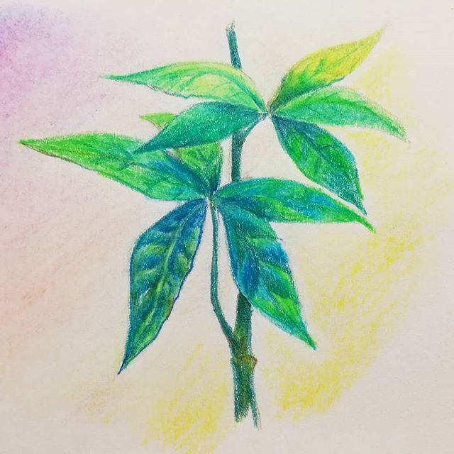 Instagram - :) #sketch #crayons #sketchnearlyeveryday #sketchbook #drawing #ilustracjadladzieci #art #kidsillustration #childrensillustration #plants #analogillustration #szkicownik #roślina #liście #illustrationinstagram #instaillustration #instaart #artinsta #artillustration #instadraw #tropical #leaves
