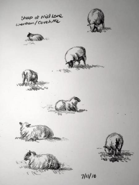 Grazing sheep 312
