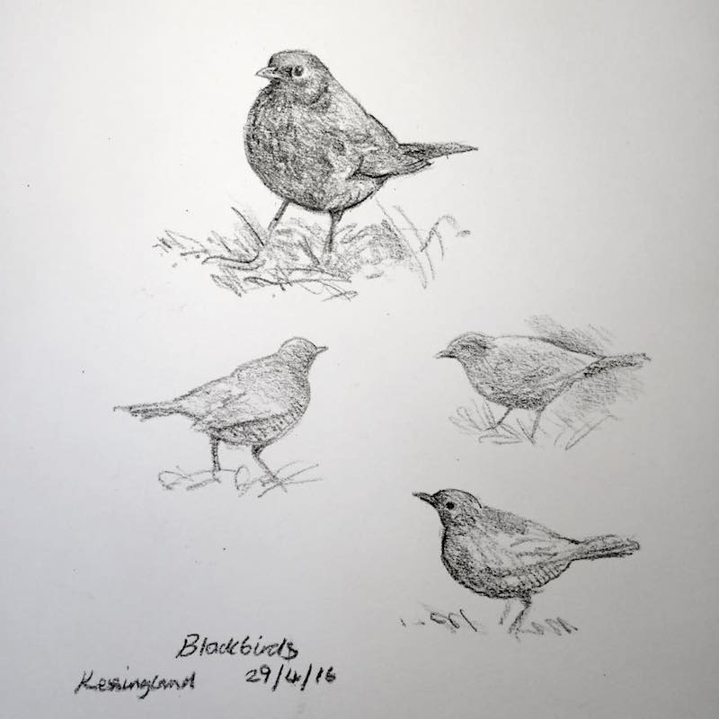 blackbird sketches 120