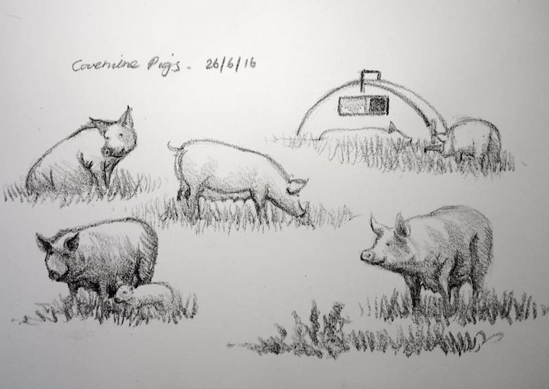 Covehithe pids sketch 178