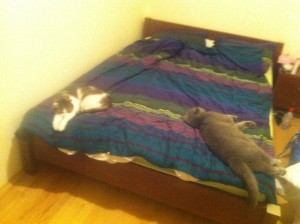 two cats sleeping on the bed