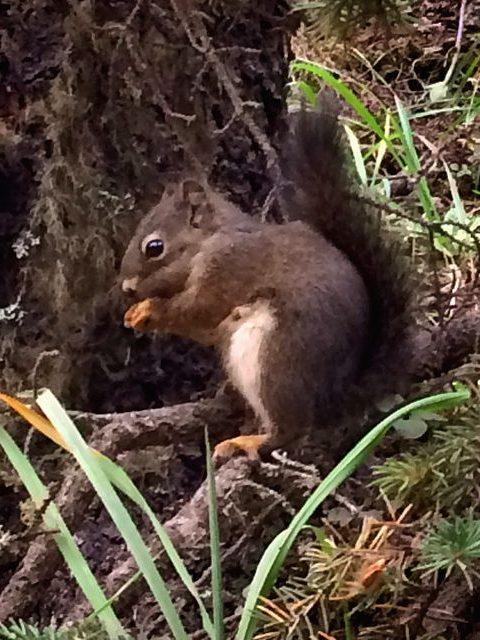 Wild animals fauna Canada