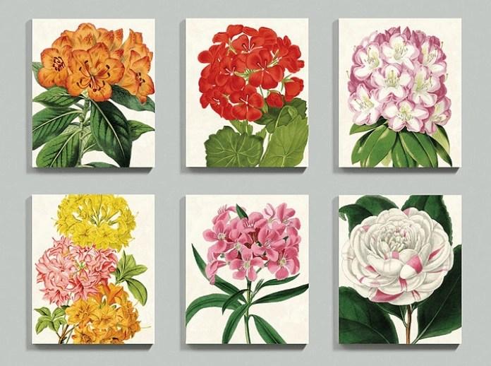 vintage_floral_prints_1