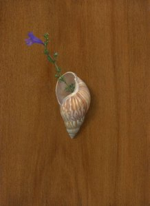 Shell and Flower, 8 x 10 inches, oil on panel