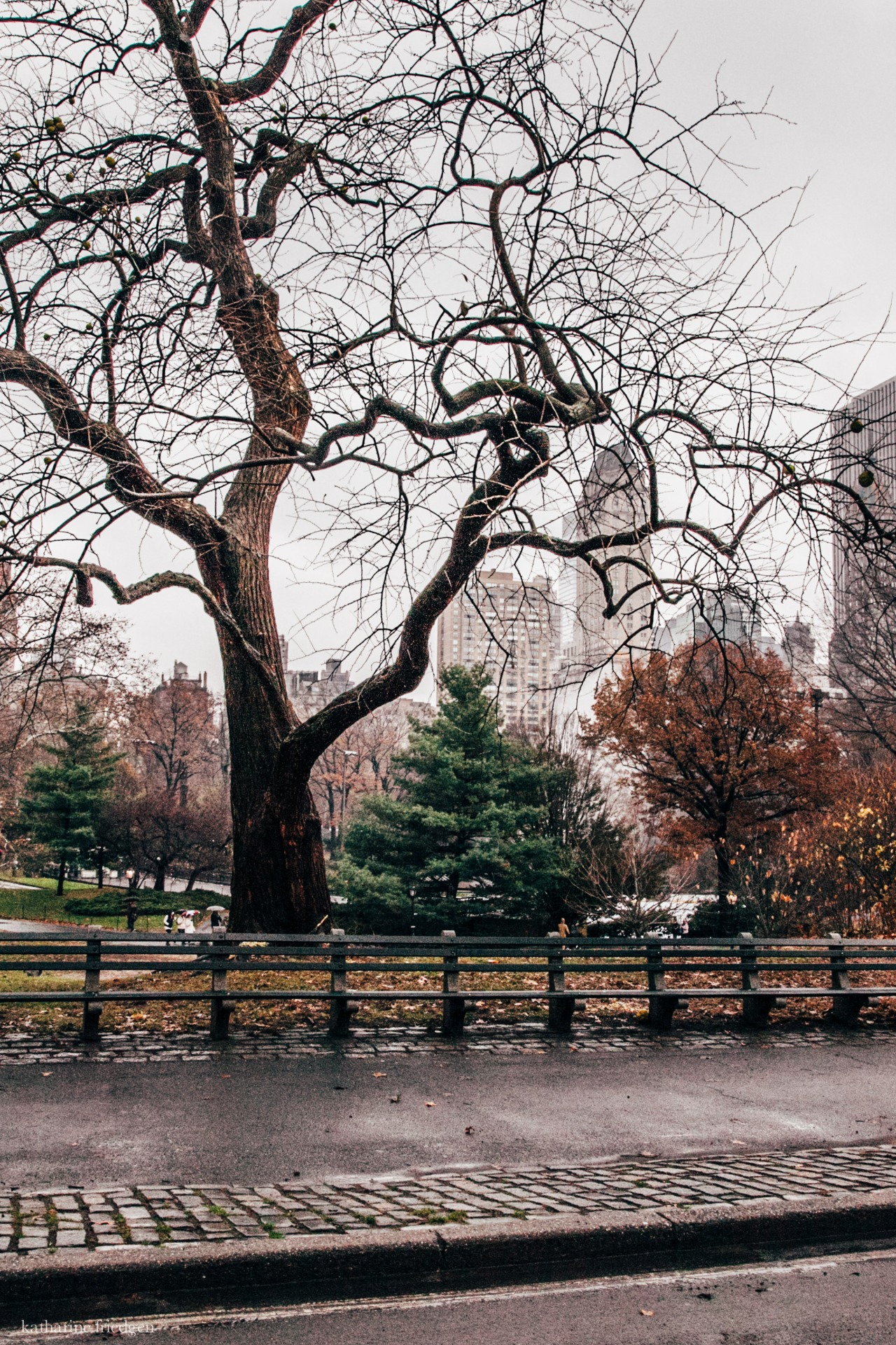 trees in new york central park
