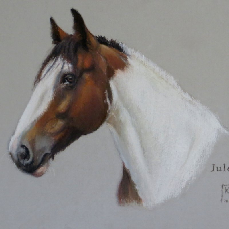 Pastel Portrait of a Skewbald Horse
