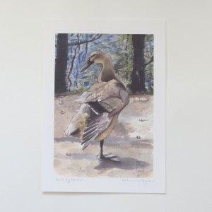 duck fine art print, duck art