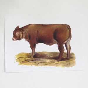 cow painting, cow fine art print