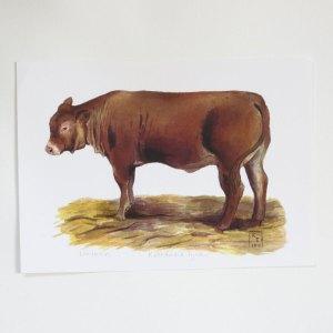 cow painting, cow fine art print