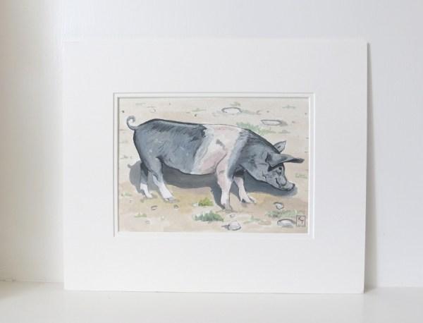 saddleback pig painting