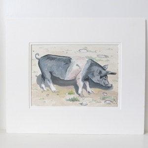 saddleback pig painting