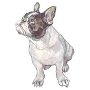 French bulldog, watercolour by Katherine Tyrer