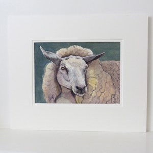 watercolour painting of a Romney sheep