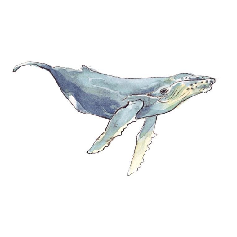 animal illustration artist