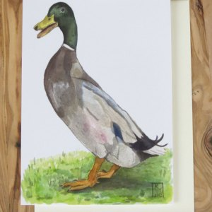 duck greetings card
