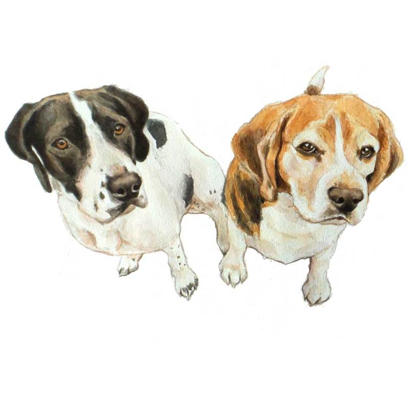 watercolour beagle and pointer portrait