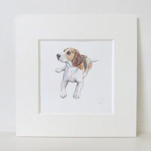 beagle watercolour illustration