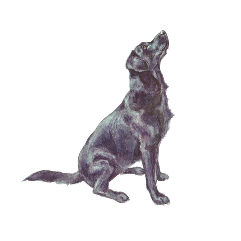 Black Labrador Begging, watercolour illustration