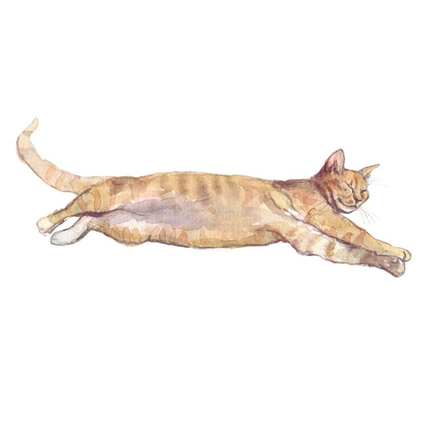 Marmalade cat original watercolour illustration