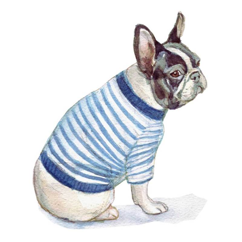 French bulldog watercolour illustration