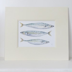mackeral watercolour illustration