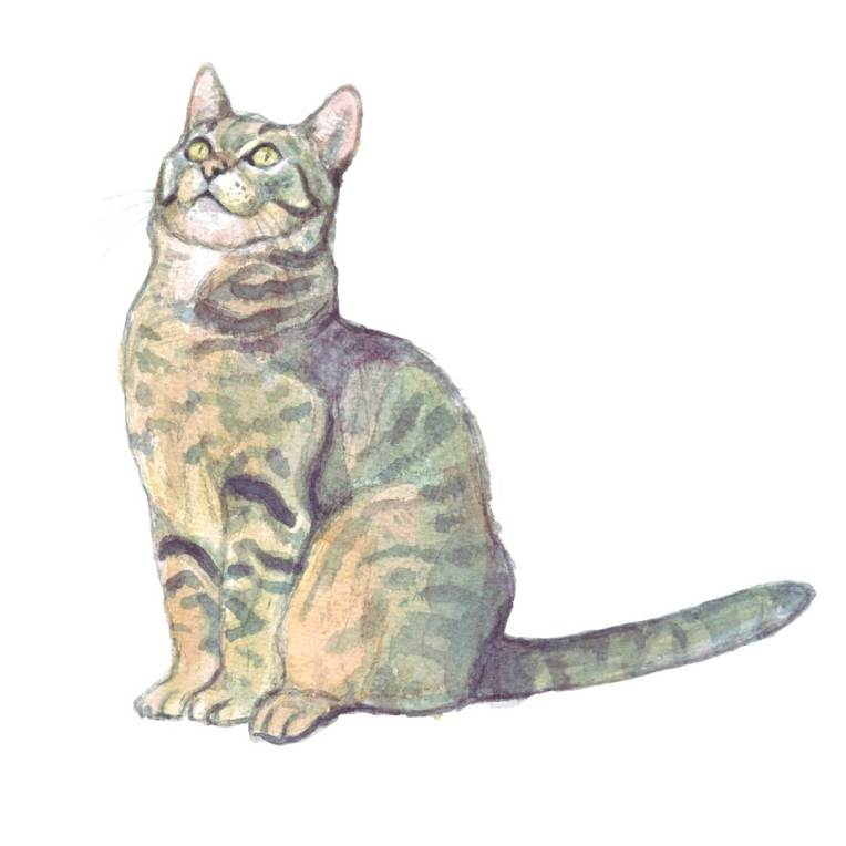 tabby cat watercolour painting