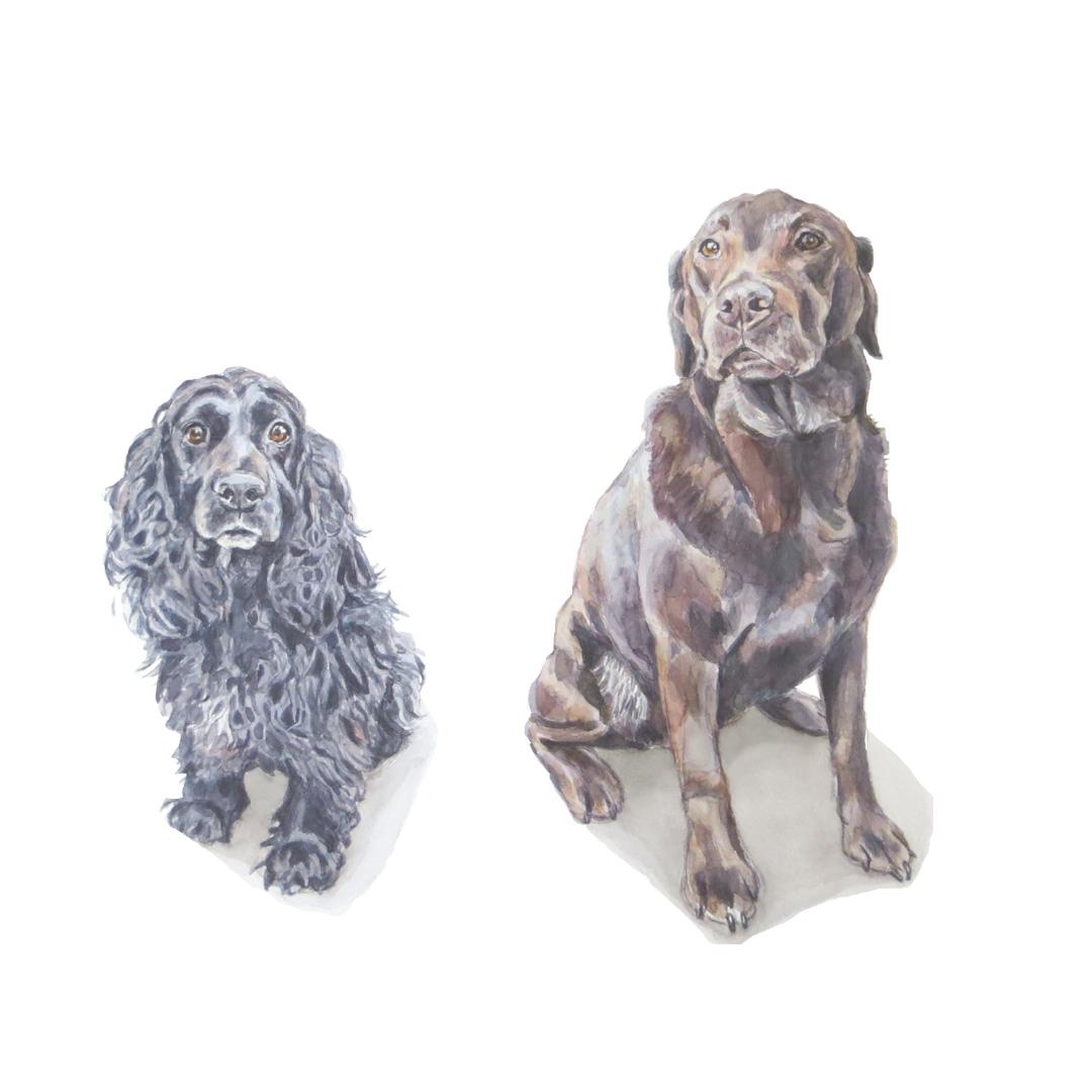 labrador and spaniel dog portrait