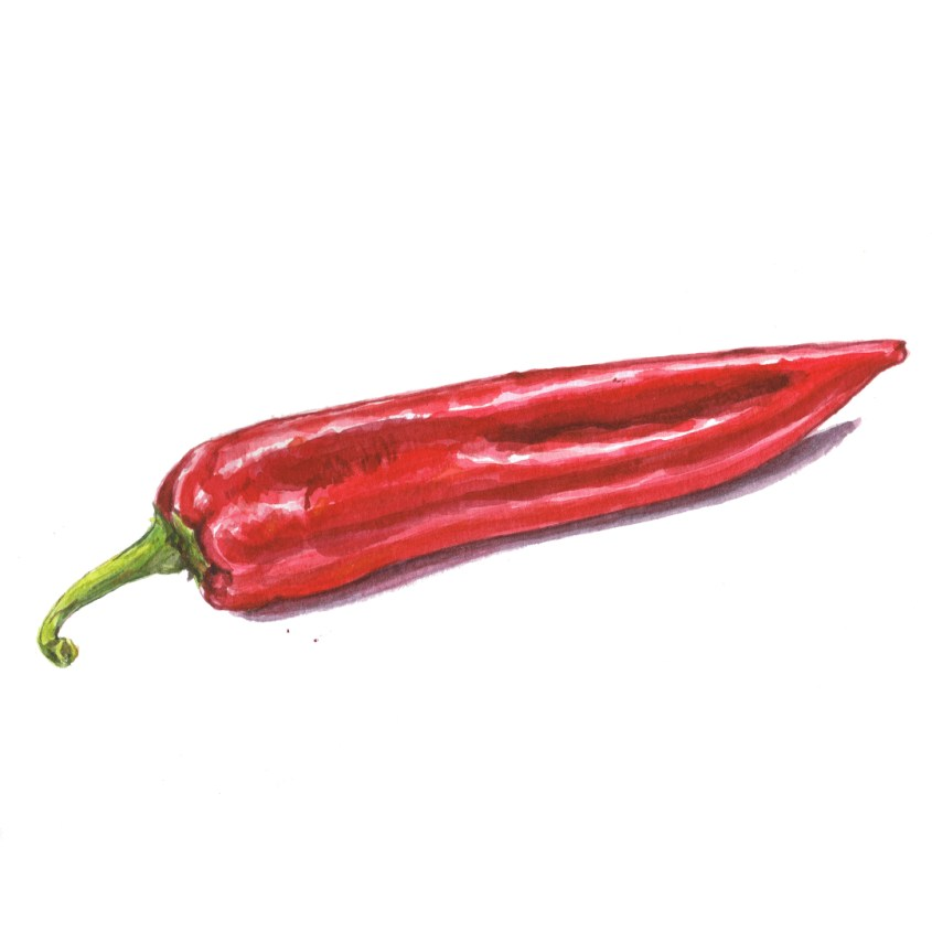 pointed pepper illustration
