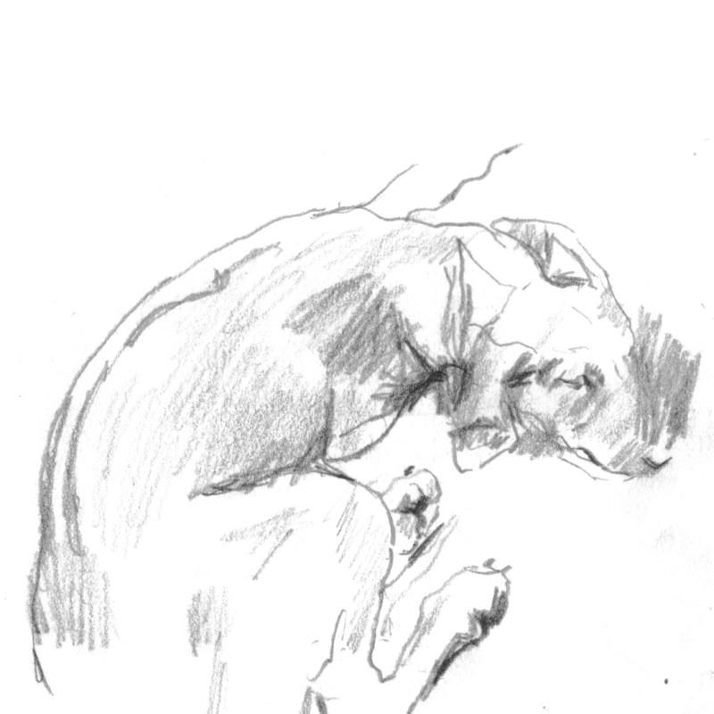 Rhodesian Ridgeback line drawing