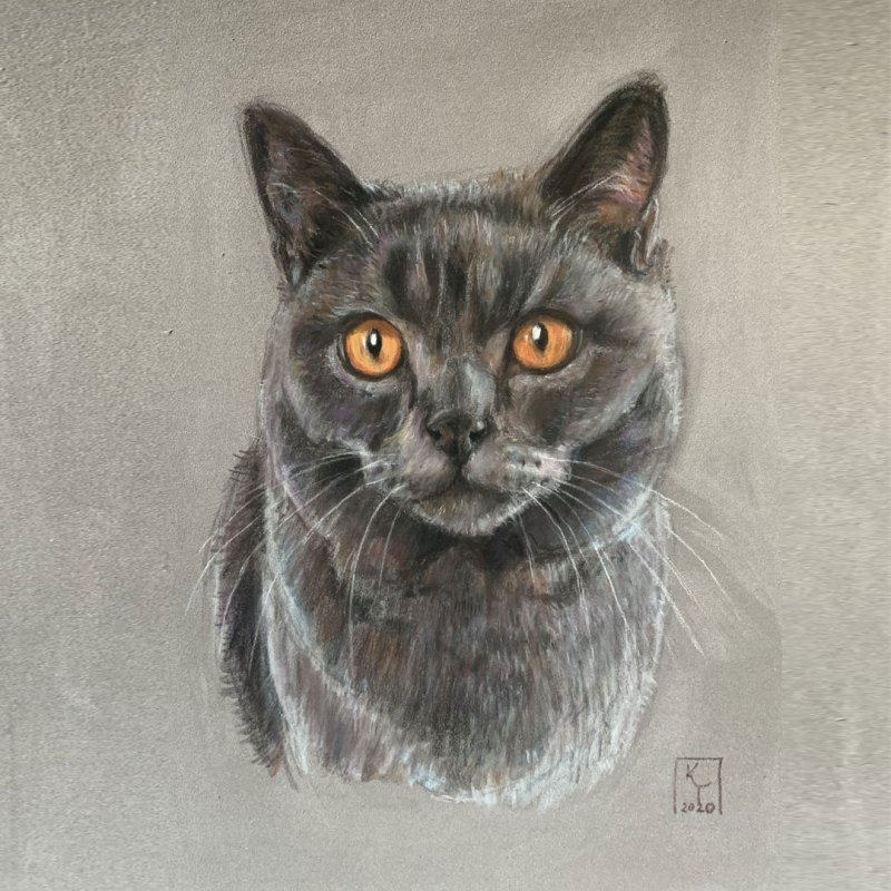 British Shorthair Blue cat pastel portrait