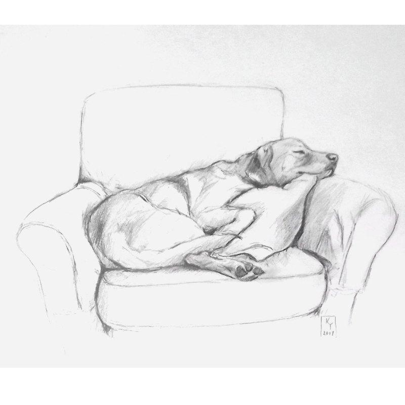 pencil-labrador-drawing